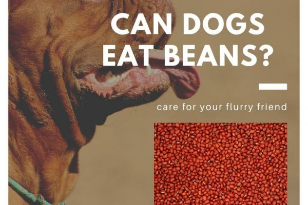 Can Dogs Eat Beans? Black, Lima, Pinto, soybeans or Kidney