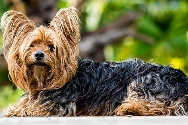 30 Dogs that do not shed – Big, medium and small