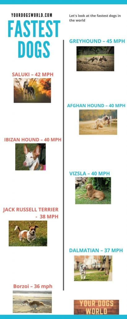Fastest-Dogs