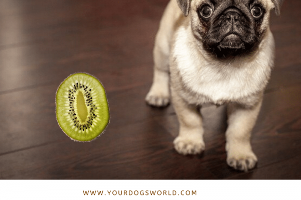 Can dogs eat kiwi fruit? Is Kiwi good for Dogs?