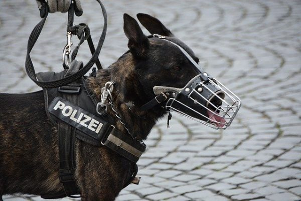 Dog with muzzle | When and how to use | Best Muzzles to buy