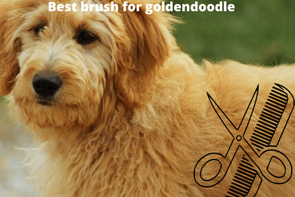 7 best brush for Goldendoodle dogs | 2020 review