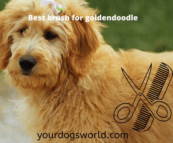 Best Brush for goldendoodle dogs