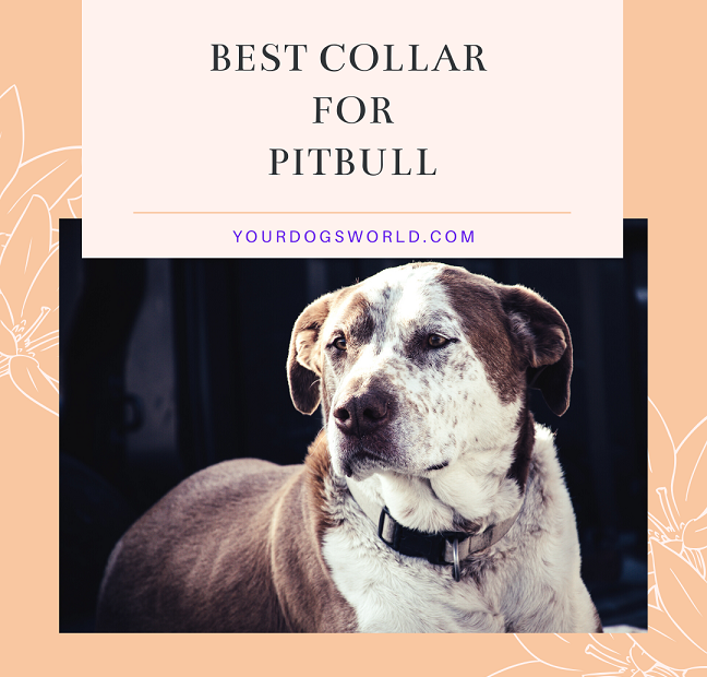 Best collars for Pitbull