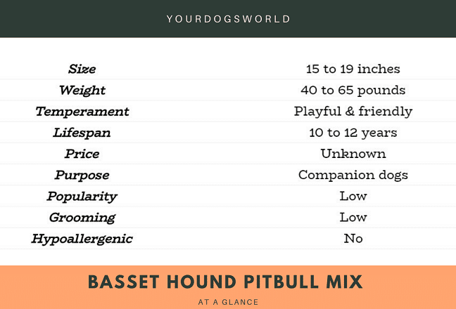 Basset hound pitbull mix at a glance