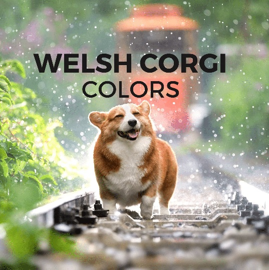 Welsh Corgi colors