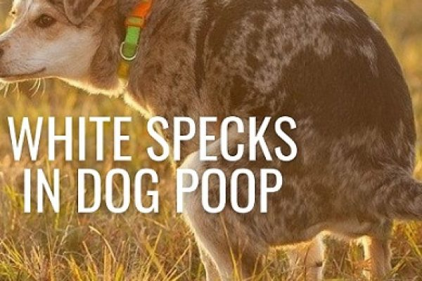 White Specks in Dog Poop – What you should know?
