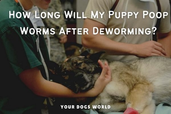 How Long Will My Puppy Poop Worms After Deworming? (Explained)