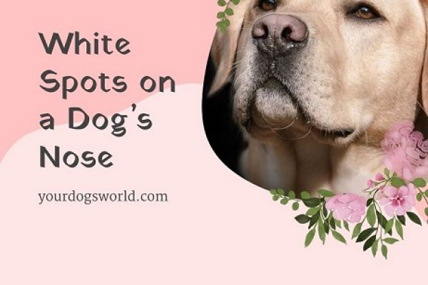 White Spots on a Dog's Nose: Reasons and Treatment