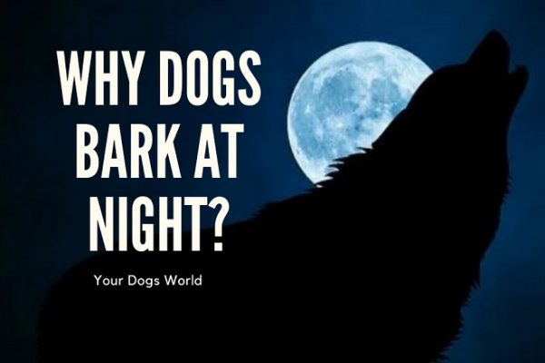 Why Do Dogs Bark At Night? Reasons and Solutions