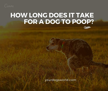 How Long Does It Take For A Dog to Poop