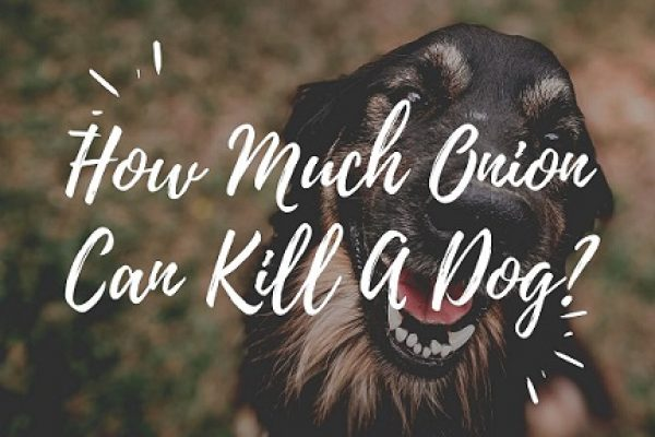 How Much Onion Can Kill A Dog?