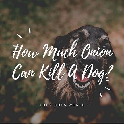 How Much Onion Can Kill A Dog