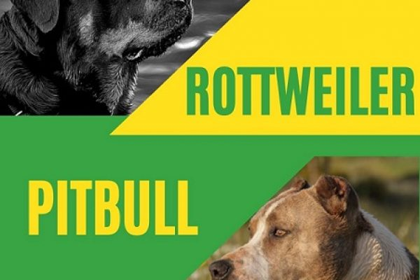 Rottweiler vs Pitbull – Who Would Win?